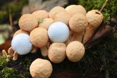 Golf e natura. fotografie stock libere da diritti