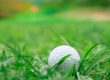 Golf en la hierba áspera imágenes de archivo libres de regalías