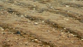 Golf en shell onder duidelijk zeewater cha-am Thailand stock footage