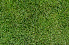 Golf Fairway Grass Close Up Royalty Free Stock Photography