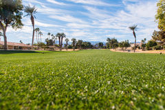 Golf fairway is green surrounded by brown rough Royalty Free Stock Photo