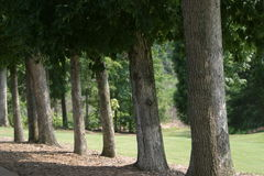 Golf Fairway Tree Lined Stock Photo
