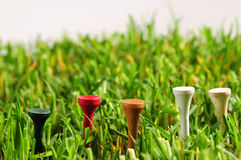 Golf field. Stock Images