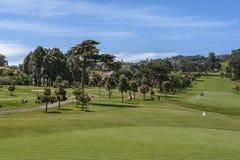 Golf field Imagenes de archivo