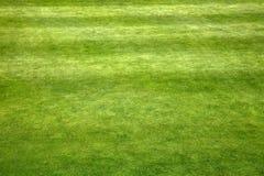 Golf field fotografia de stock