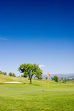 Golf Field. Tree and flag in golf field with deep blue sky royalty free stock photography