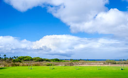 Golf field background Royalty Free Stock Photography