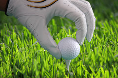 Golf glove with ball Stock Photos