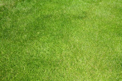 Golf grass Stock Photography