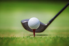 Golf in grass. Golf club and ball in grass Stock Photos