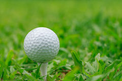Golf on grass Rough Royalty Free Stock Photo