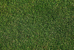 Golf green. Perfect green lawn texture,golf course stock image