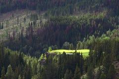 Free Golf Green Royalty Free Stock Photo - 3117375