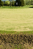Golf green during aeration process showing cores Royalty Free Stock Photos
