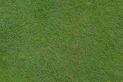 Golf Green Close Up. A close up shot of the grass on a golf green royalty free stock photos