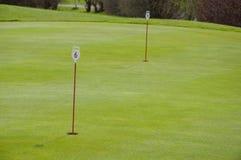 Golf green closeup stock image