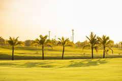 Golf green field garden with trees Royalty Free Stock Images