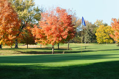 Golf Green and Flagstick with Colorful Fall Leaves. Of Maple Trees Stock Image