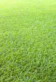 Golf Green Grass Background Stock Photography