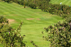 A golf green on an orchard Royalty Free Stock Images