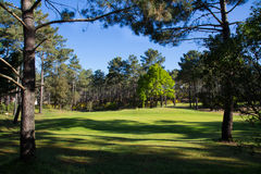 Golf green. View of a nice green of golf surrounded by trees during a sunny day stock photo