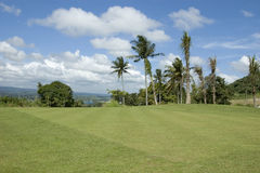 Golf Greens. Coconuts, mountains, and grass Stock Photography