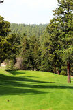 Golf Hole surrounded by Trees Stock Image