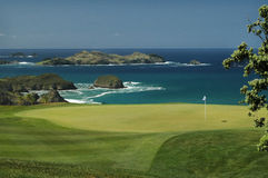 Golf - il verde Immagini Stock