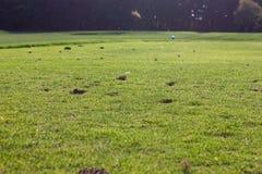 golf jego gry w ostatniej klasie fotografia royalty free