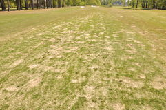 Golf Lawn. Poorly maintained golf course with patchy growth Royalty Free Stock Photo