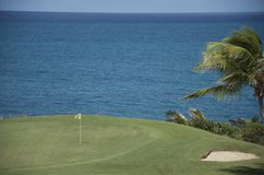 Golf and palm tree Royalty Free Stock Photography