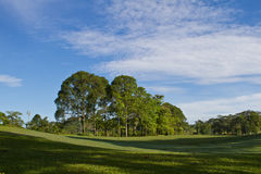 Golf Park. Beautiful golf park in the morning royalty free stock image
