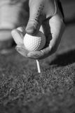 Golf player placing ball on tee Royalty Free Stock Images