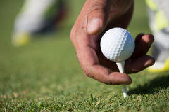 Golf player placing ball on tee Royalty Free Stock Photography