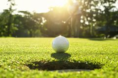Free Golf Player Putting Golf Ball Into Hole Stock Image - 154427301