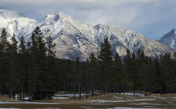 Golf ruw in de winter Stock Afbeelding