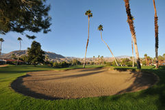 Golf sand trap with palm trees in fairway Stock Photo