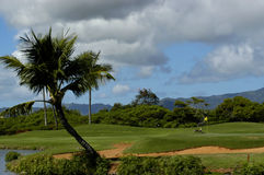 Golf spielen mit den Nene Gänsen Stockfotografie