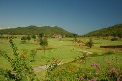 golf thailand Royaltyfri Fotografi