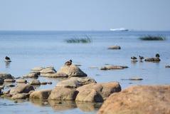 Golf van Finland Royalty-vrije Stock Afbeelding