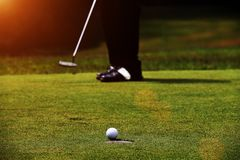 Golfare sätter golf i aftongolfbanan Royaltyfri Bild