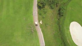 Golfautofahren auf Stra?e auf gr?ner Kurs- und Seelandschaftsbrummenansicht Luftlandschaftsgr?ngolffeld und -auto an stock footage
