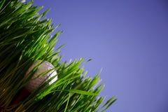 Golfbal royalty-vrije stock fotografie
