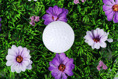 Golfbal in de weide Royalty-vrije Stock Afbeeldingen