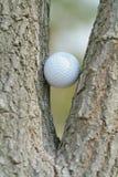 Golfbal in een boom Stock Afbeelding