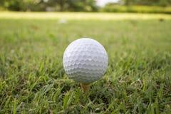 Golfbal op groen gras Stock Afbeeldingen