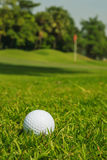 Golfbal op groen gras Stock Foto's