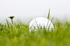golfball Arkivbilder