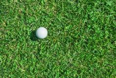 Golfball auf dem Gras Lizenzfreie Stockfotos