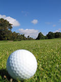 Golfball auf Gras Stockfoto